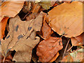 J4078 : Autumn leaves, Glenlyon, Holywood (4) by Albert Bridge