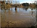 SP2965 : River Avon by Emscote Gardens, Warwick 2012, November 23, 13:40 by Robin Stott