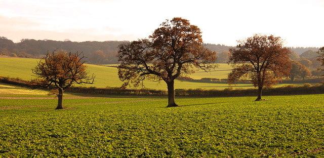 Autumnal light, Weston Patrick