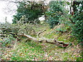 SE0820 : Fallen tree across Church Lane by Humphrey Bolton