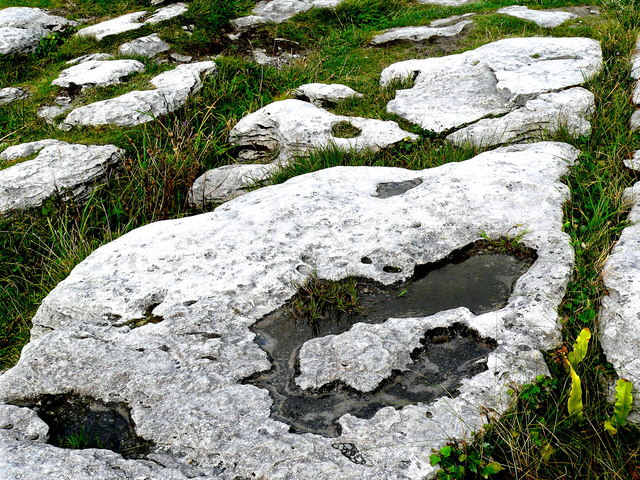 Burren - Poulnabrone Dolmen Site - Grass & Plants between Stones of the Burren