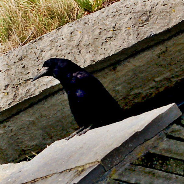 """Cliffs of Moher - Vigilant Guard Rook making sure """"All is Well"""""""
