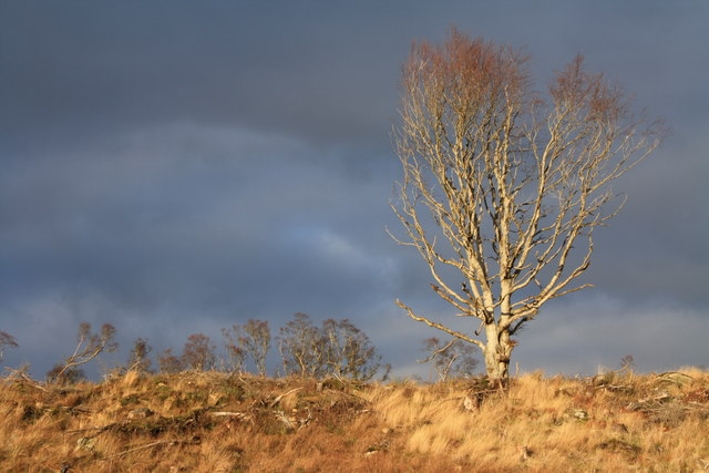 Lone tree sunshine