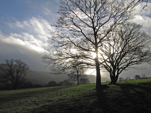 Trees near Hogstow Hall