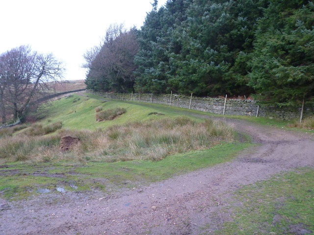 Track to Grey Carrs