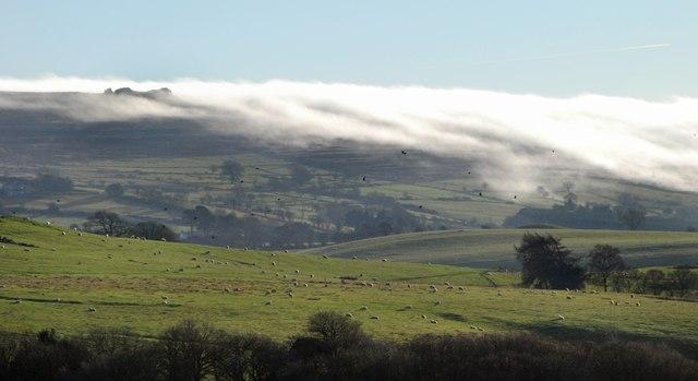 Mist, birds and sheep