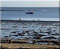 NU2613 : Fisherman digs for bait : Week 51