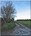 TL3043 : Paths near Down Hall Farm by John Sutton