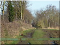 TL2778 : Large cat hunting in Cambridgeshire by Richard Humphrey