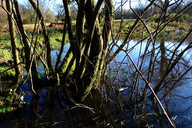 Wood Pond, Selborne Common