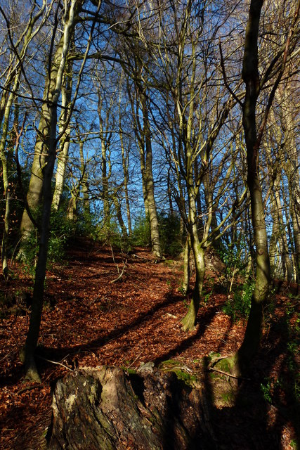 Beech woodland, Short Lythe, Selborne