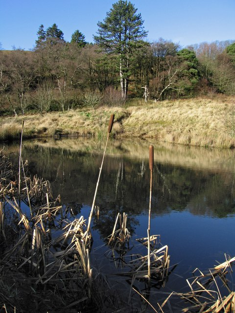 Pond near Heath Plantation