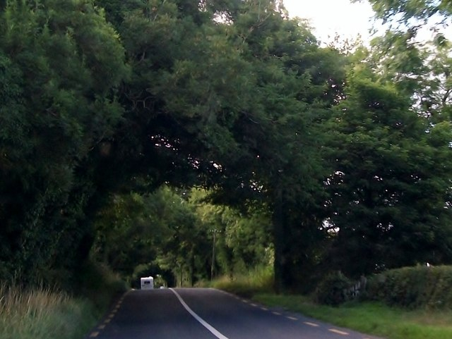 Arched trees on the R162 north of Nobber