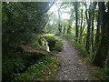SX0556 : Luxulyan Valley Trail by Chris Gunns