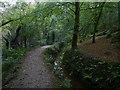 SX0557 : Luxulyan Valley Trail by Chris Gunns