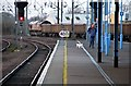 TL5479 : Ely: Class 66, man and dog : Week 6