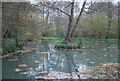 SU8427 : Durrants Pond by N Chadwick