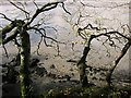 SX4461 : Branches above the Tavy by Derek Harper