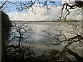 SX4461 : Tavy estuary from Warleigh Wood by Derek Harper