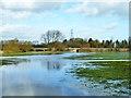 SP6105 : Thame water meadows above Wheatley Bridge : Week 8
