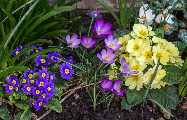 Spring flowers london n14 christine matthews cc by sa20 spring flowers london n14 mightylinksfo