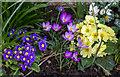 TQ2995 : Spring Flowers, London N14 : Week 8