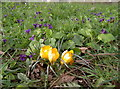 ST5769 : Colours of Spring by Neil Owen