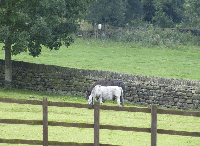 Fence, Fields and Feeding, off Mortimer Road, Midhopestones, near Stocksbridge