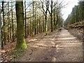 SE2244 : Chevin Forest Park [10] by Christine Johnstone