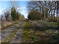 SK8200 : The overgrown and disused former A47 by Mat Fascione