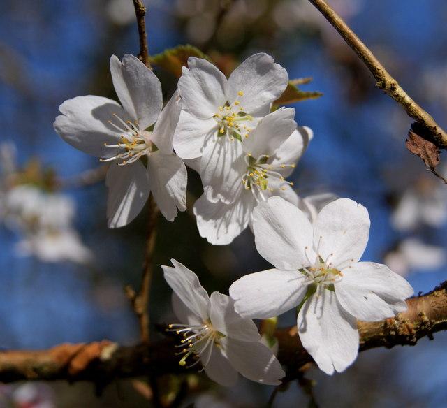 Blossom at Nine Springs