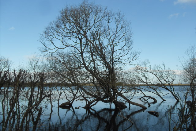Trees in the flood