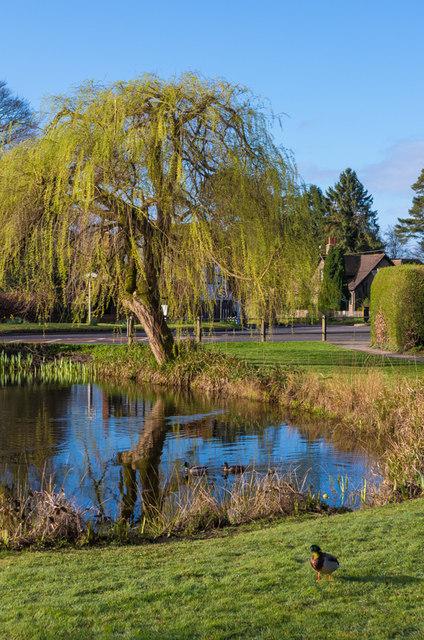 Buckland Pond