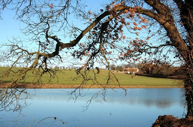 The winter pond, Bidden