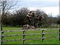 SP7904 : Pollarded oak tree, Longwick by Bikeboy
