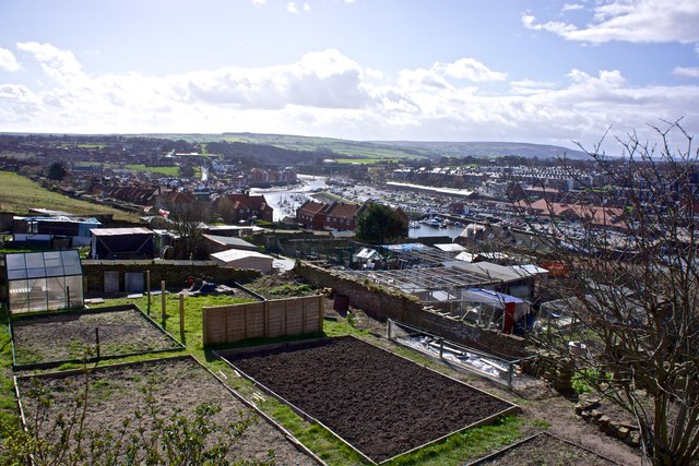 Allotments near Whitby Abbey
