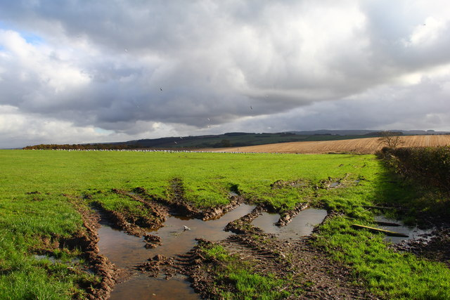Wet Fields Seagulls Flocking, East of Ayr