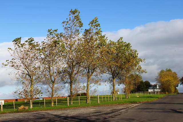 A stand of trees off the road to Sessionfield, Ayr