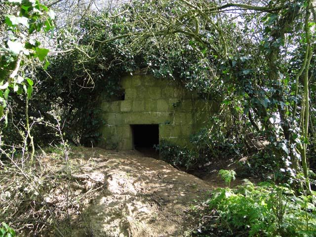 WW1 pillbox concealed by undergrowth