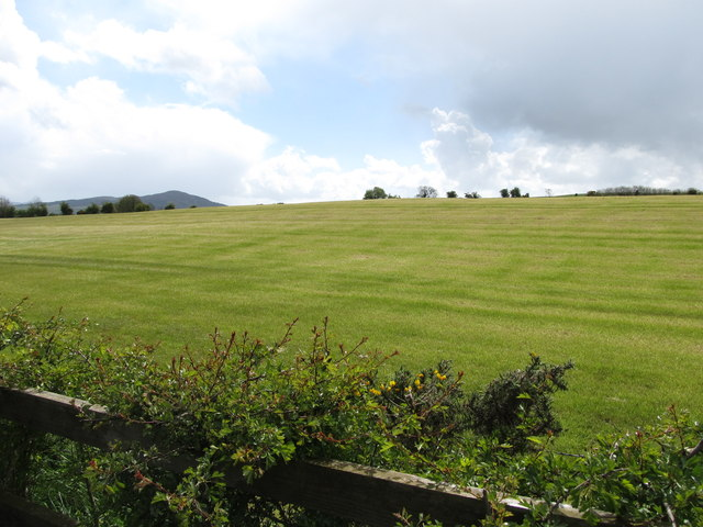 Grassland south of Ewart's Cross Roads