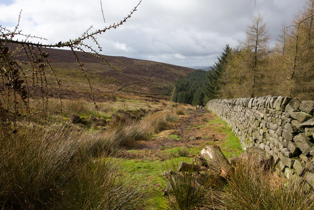 Looking downhill along the stone wall