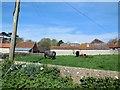 TQ4007 : Calves and lambs at Iford Farm by Paul Gillett
