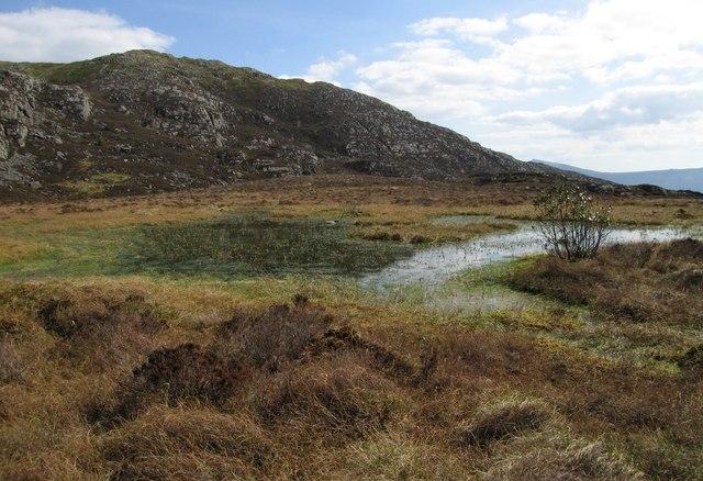 Overgrown pool near Craig y Merched