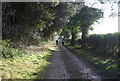 TF9141 : National Cycle Route 1, Gallow Hill Wood by N Chadwick