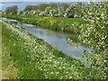 TF1007 : Maxey Cut near Lolham Bridges by Richard Humphrey