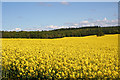 NH9954 : Rape Field by Anne Burgess
