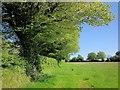 SX3371 : Field boundary, Golberdon by Derek Harper