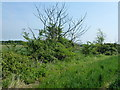 TL4677 : Hedgerow north of Haddenham by Richard Humphrey