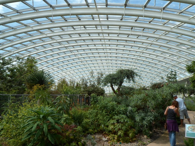 Inside the Great Glasshouse at the National Botanic Garden of Wales