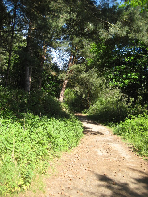 While you can (2): woodland path in Kenton Hills